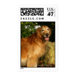 Golden Retriever Panting Postage Stamp