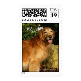 Golden Retriever Panting Postage Stamp