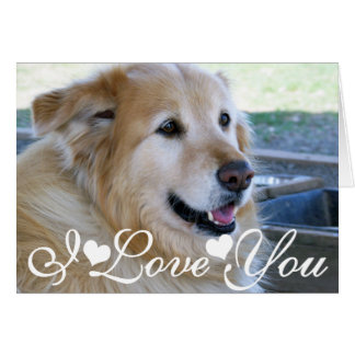 Golden Retriever Photo Image I Love You Card