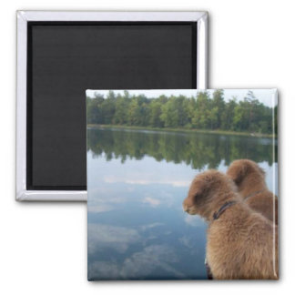 Golden Retriever Photography Gifts Magnet