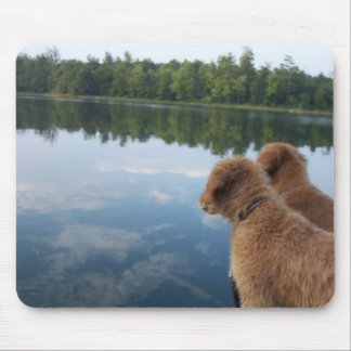 Golden Retriever Photography Gifts Mouse Pad
