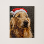 Golden Retriever posing for his Christmas Puzzle