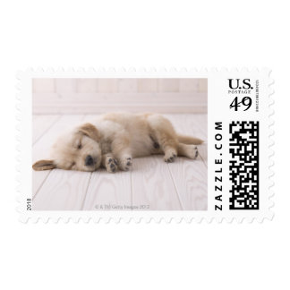 Golden Retriever Stamps
