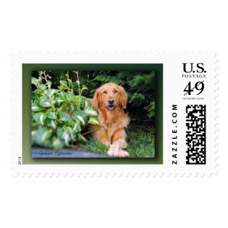 Golden Retriever Postage Stamp Beautiful Bailey