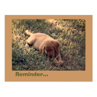 Golden Retriever Postcard