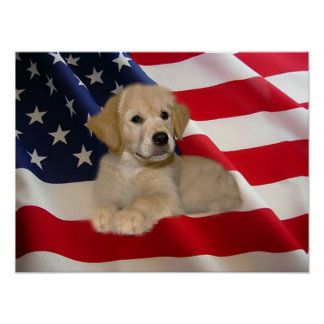 Golden Retriever Poster All American Puppy