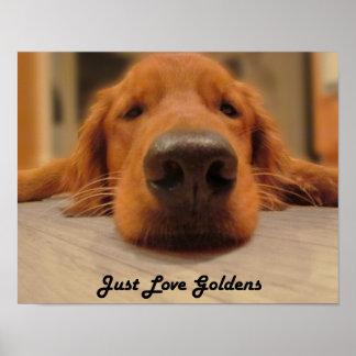 Golden Retriever Poster, Nose Poster
