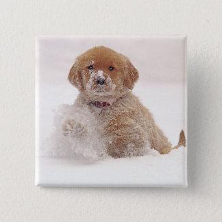 Golden Retriever Pup in Snow Button