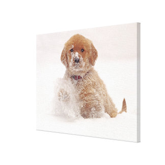 Golden Retriever Pup in Snow Canvas Print