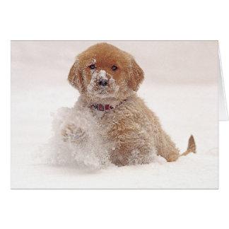 Golden Retriever Pup in Snow Card