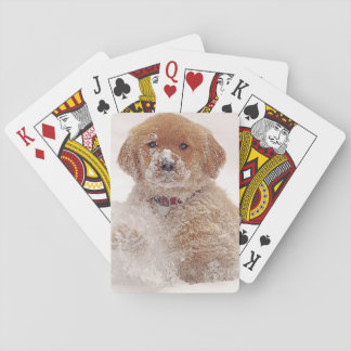 Golden Retriever Pup in Snow Playing Cards