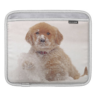 Golden Retriever Pup in Snow Sleeve For iPads