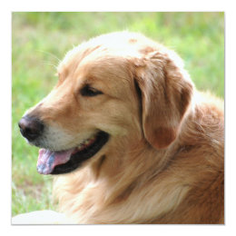 Golden Retriever Pup Invitations