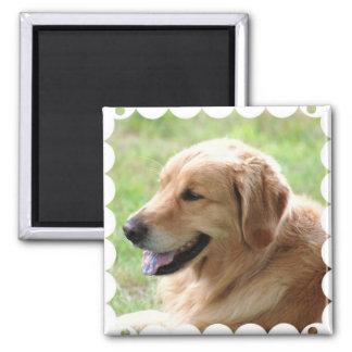 Golden Retriever Pup Magnet