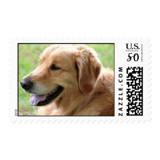 Golden Retriever Pup Postage Stamp