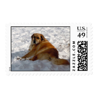 Golden Retriever Pup Snow Angel - Ranch Dog Lover Stamps