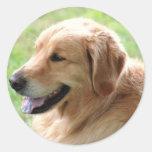 Golden Retriever Pup Stickers