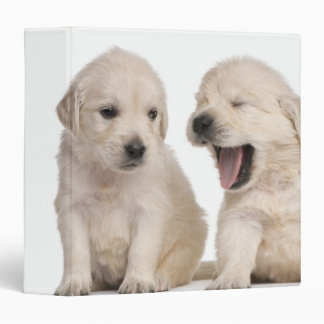 Golden Retriever puppies (4 weeks old) Binder