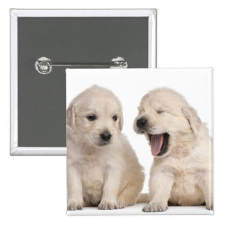Golden Retriever puppies (4 weeks old) Button