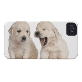 Golden Retriever puppies (4 weeks old) Case-Mate iPhone 4 Case