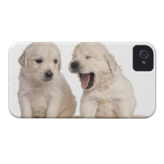 Golden Retriever puppies (4 weeks old) iPhone 4 Cover