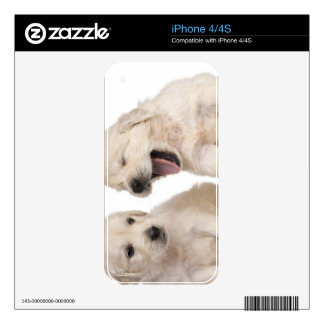 Golden Retriever puppies (4 weeks old) Skin For iPhone 4