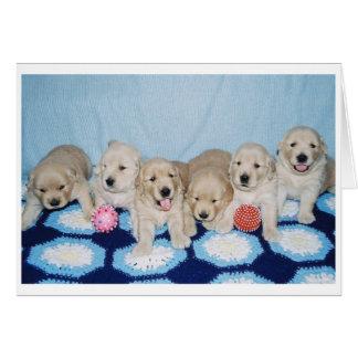 Golden Retriever Puppies Card