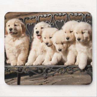 Golden Retriever Puppies Mouse Pad