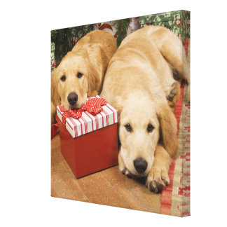 Golden retriever puppies with christmas gift canvas print