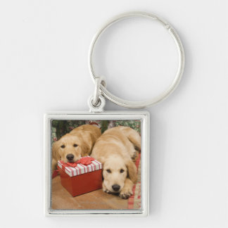 Golden retriever puppies with christmas gift keychain