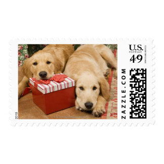 Golden retriever puppies with christmas gift postage stamp