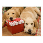 Golden retriever puppies with christmas gift postcard
