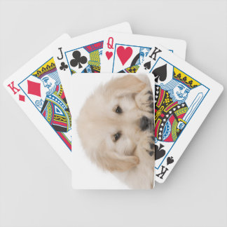 Golden retriever puppy (20 weeks old) bicycle playing cards