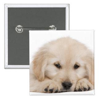 Golden retriever puppy (20 weeks old) button