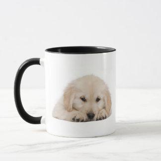 Golden retriever puppy (20 weeks old) mug