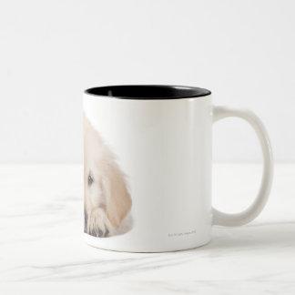 Golden retriever puppy (20 weeks old) Two-Tone coffee mug
