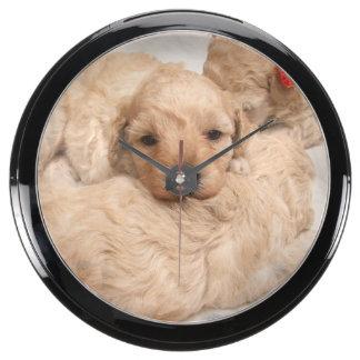 golden-retriever-puppy-2 aquavista clocks