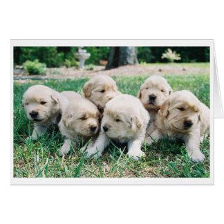 Golden Retriever Puppy 6 Pack Card