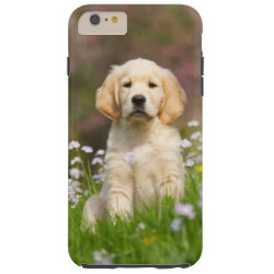 Golden Retriever puppy a cute Goldie Tough iPhone 6 Plus Case