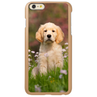 Golden Retriever puppy a cute Goldie Incipio Feather Shine iPhone 6 Plus Case