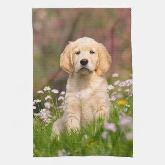 Golden Retriever puppy a cute Goldie Hand Towels