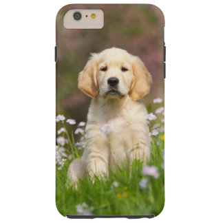 Golden Retriever puppy a cute Goldie Tough iPhone 6 Plus Case