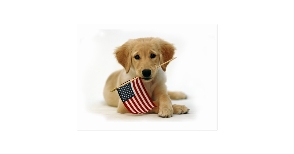 wedding ideas with wood golden retriever puppy and flag postcard zazzle 27922