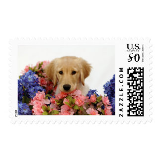 Golden Retriever Puppy and Flowers Postage