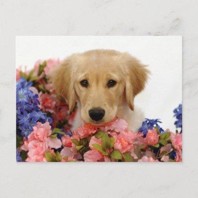 golden retriever dog house. Golden Retriever Puppy and
