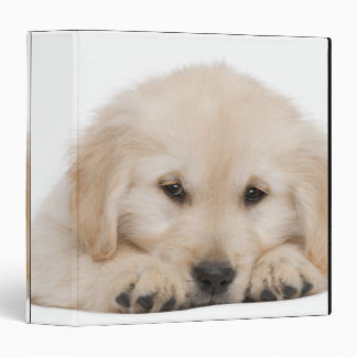 Golden retriever puppy binder
