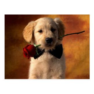 Golden Retriever Puppy Brings A Rose Postcard
