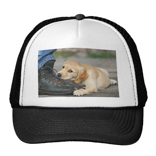 Golden retriever puppy chews at the tying lacing mesh hat