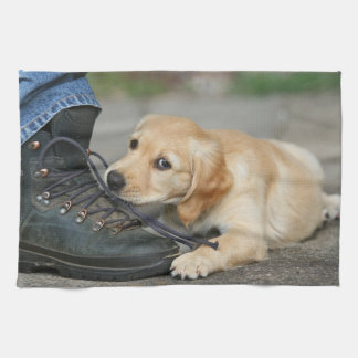 Golden retriever puppy chews at the tying lacing towels