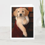 Golden Retriever Puppy Christmas Stocking Holiday Card